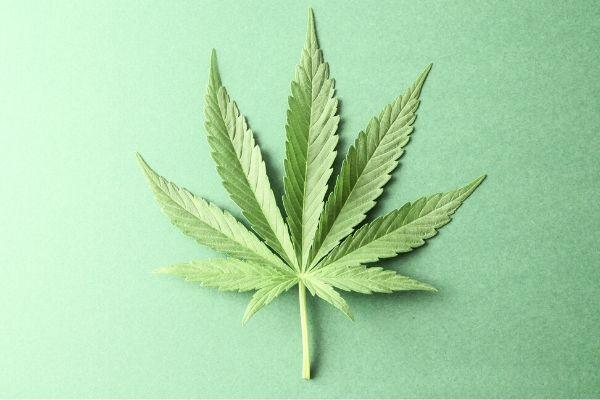 Criminalization of Marijuana Panel