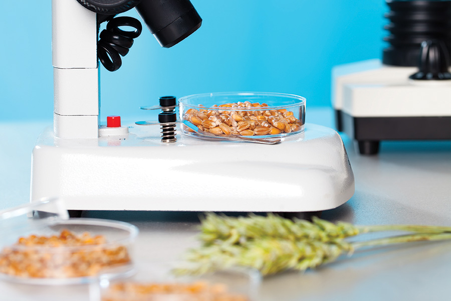 microscope-food-grains_web.jpg