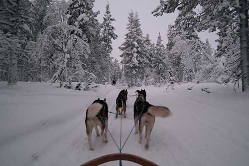 Jhannine Verceles '18, When In Finland ... Go Dog Sledding