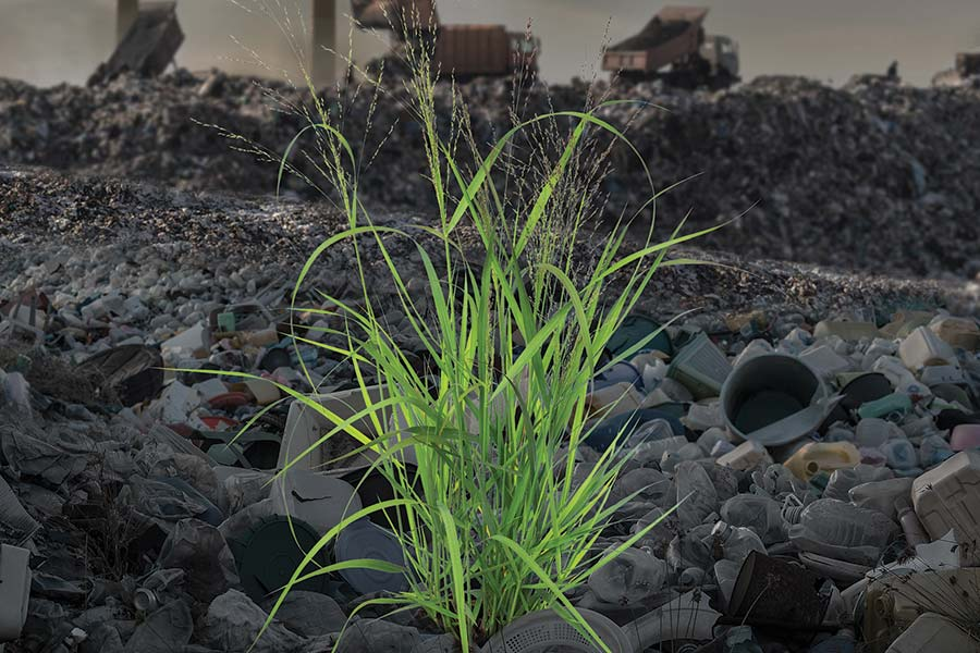 illustration of switchgrass in a landfill